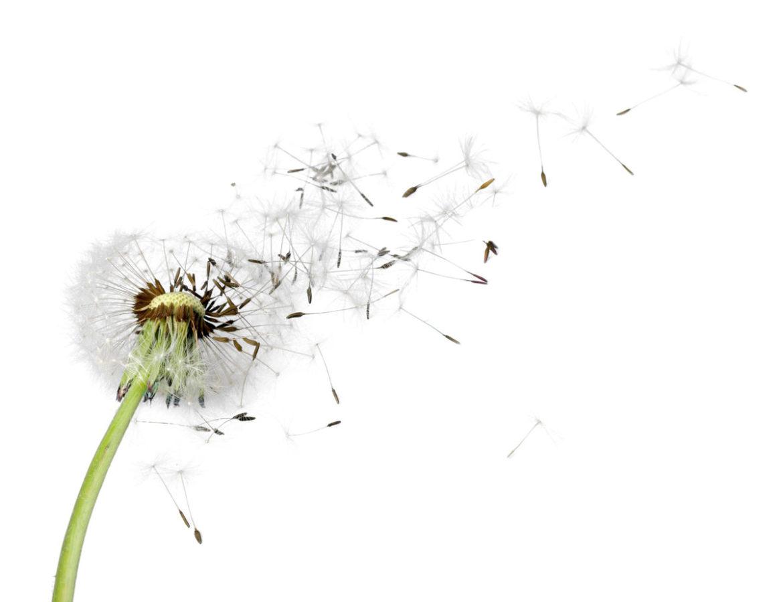 Wind der Veränderung